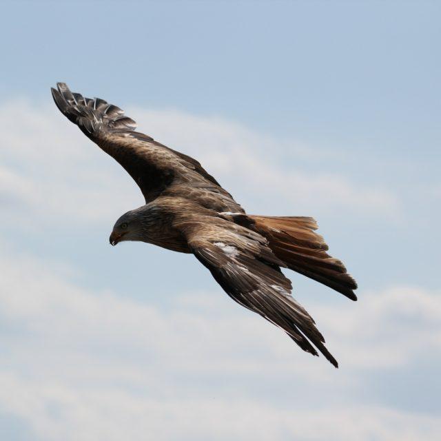 aigle dans un ciel bleu